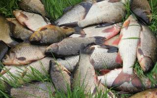 Молитва за рыбалку