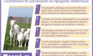 Молитва на продаж коровы