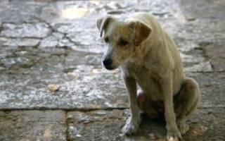 Как вернуть собаку домой молитва