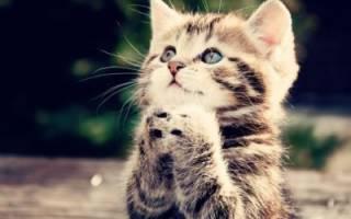 Молитва чтобы найти животного