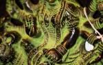 Молитва богини сарасвати